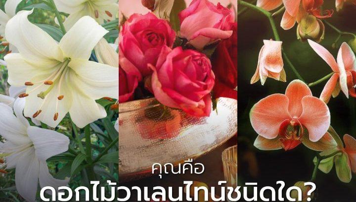 คุณคือดอกไม้วาเลนไทน์ชนิดใด