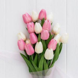 ช่อดอกทิวลิปสีชมพูและสีขาว